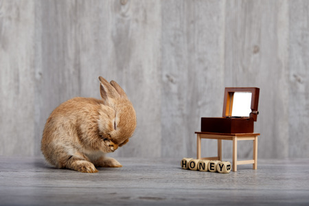 Brown rabbit listening to music box by feeling love Stock Photo - 122672401