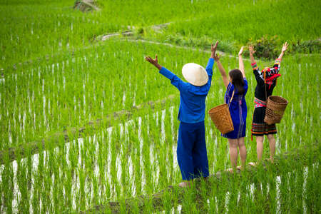 Asian male farmer and hmong women with basket standing on rice field on tribe and happiness by hand rising up together