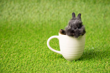 One black small adorable bunny sitting inside white cup on green grass background. Cute baby Netherlands Dwaf and Holland lops rabbit for Easter celebration