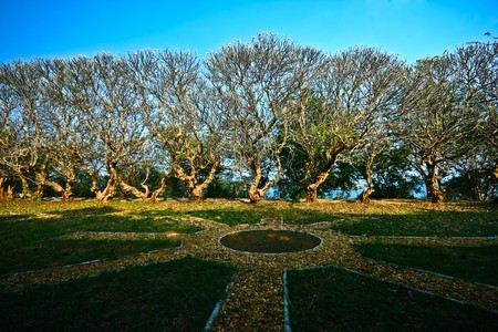 Frangipani,Plumeria trees in autumn photo