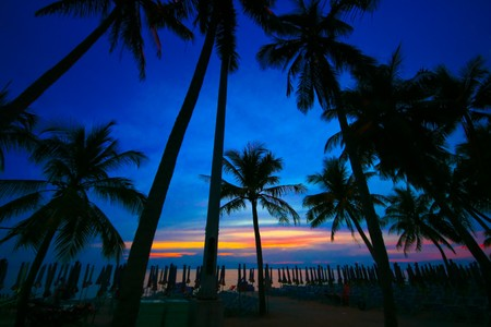 coconut trees silhouette at sunset photo