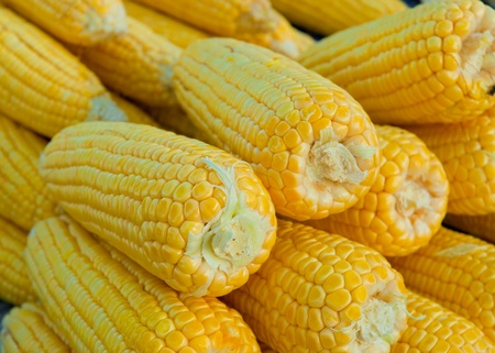 Group of fresh corn vegetable food background