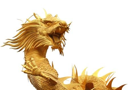 dragones: El dragón chino aislados sobre fondo blanco
