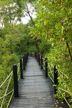 A wooden bridge go to the mangrove forest  photo