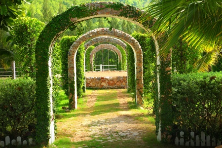 bower: Pergola and plant in a garden ,at western Thailand