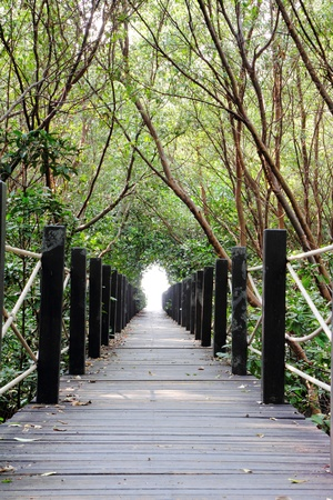 Wooden bridge in the mangrove forest  photo