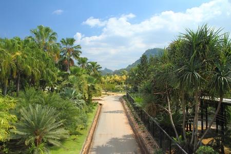 path through in the garden  photo