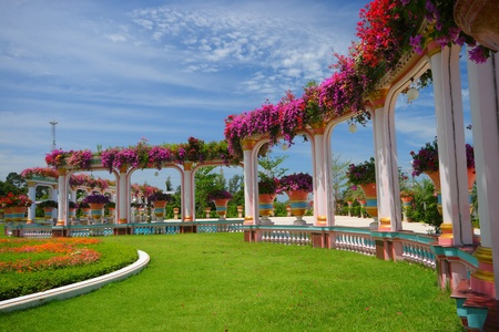 Beautiful lush garden in the tropic photo
