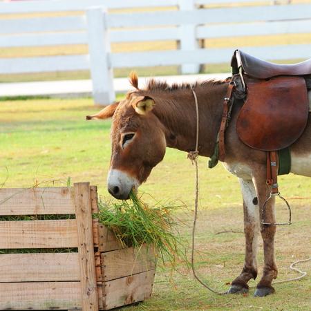 burro: Burro grazing in the zoo  Stock Photo