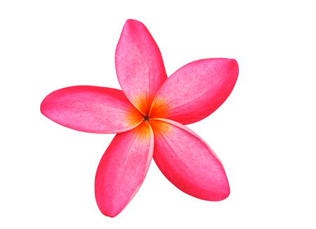 Tropical flowers of frangipani or pink plumeria flowers isolated on white with clipping path. Stock Photo