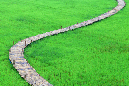 A beautiful of bamboo nature pathway in the rice field in Thailand.