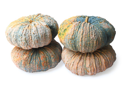 Group of pumpkin isolated on white background, clipping path.