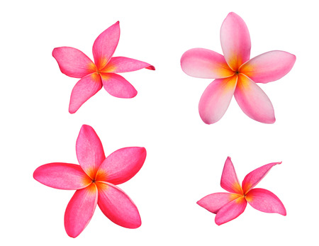 Set of tropical flowers frangipani or pink plumeria flowers isolated on white with clipping path. Stock Photo