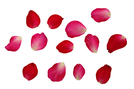 Bunch of petals pink roses isolated on white background clipping path, image for design and other.