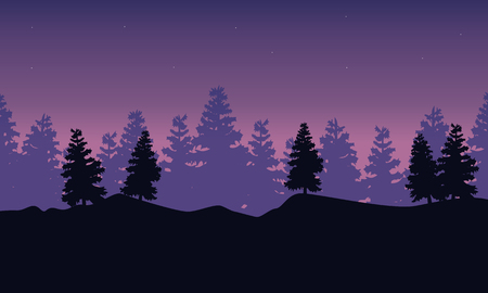 lake sunset: Silhouette of spruce scenery at night
