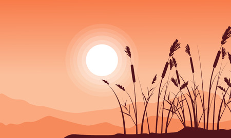 coarse: Silhouette of coarse grass with mountain background landsacpe