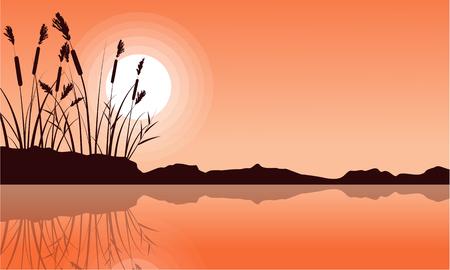 coarse: Silhouette of coarse grass on lake landscape
