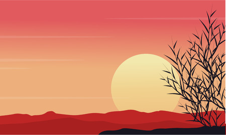 coarse: Silhouette of grass at morning scenery