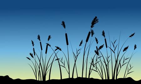 coarse: Coarse grass on hill scenery silhouettes