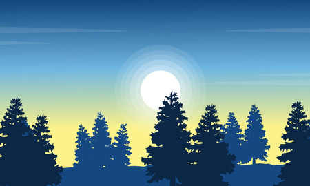 coarse: At morning spruce forest landscape