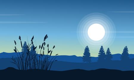coarse: Silhouette of coarse grass on desert landscape
