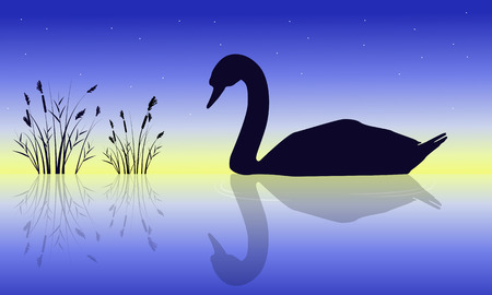 Silhouette of swan beauty nature scenery