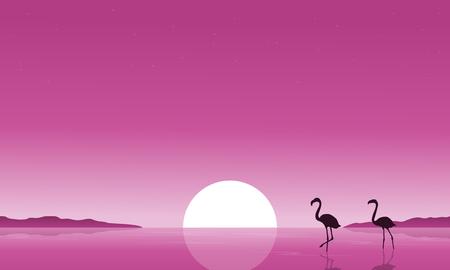 lake sunset: Collection stock of flamingo on lake scenery