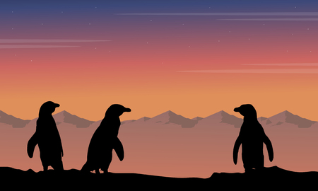 At night penguin silhouette beauty landscape Illustration