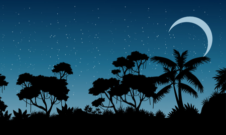 evaporation: Landscape of rain forest at the night