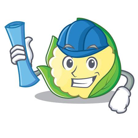 Architect cauliflower character cartoon style vector illustration.
