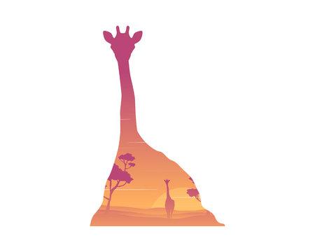 Silhouette of inside giraffe at sunrise landscape.