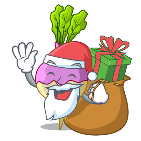 Santa with gift raw rutabaga root isolated on mascot