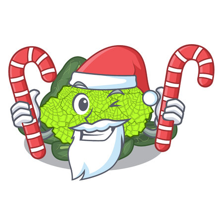 Santa with candy roman cauliflower isolated on the mascot vector illustration