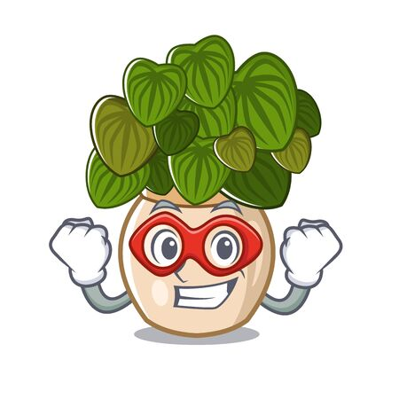 Super hero peperomia isolated within in the character