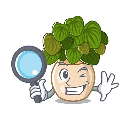 Detective peperomia isolated within in the character