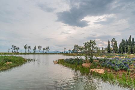 wetland: Wetlands