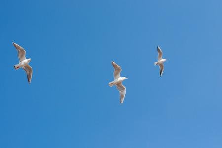 cielo azul: La Gaviota Foto de archivo