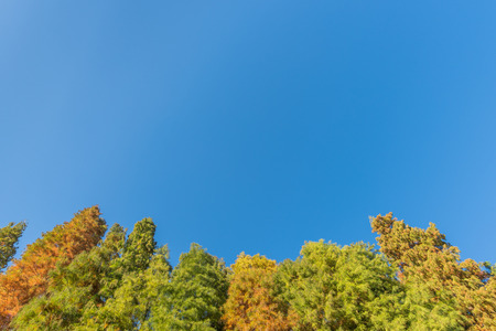 low angle views: Autumn
