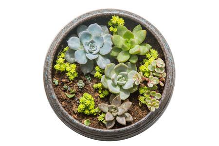 succulent: Succulent plants Stock Photo