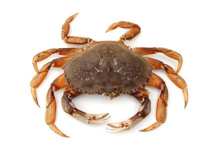crab meat: isolated crab on white background Stock Photo