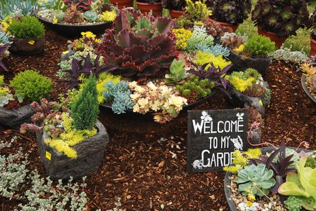 stuffer: welcome to my succulent garden Stock Photo