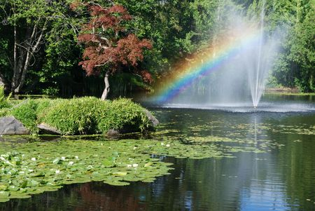 rainbow in lily pond