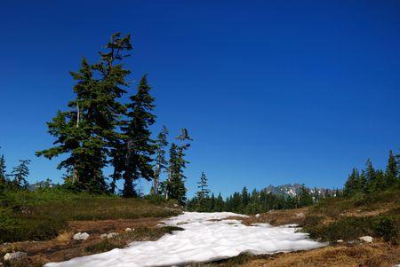 山のパン屋公園でダグラス ツリー