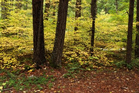 fall color forest