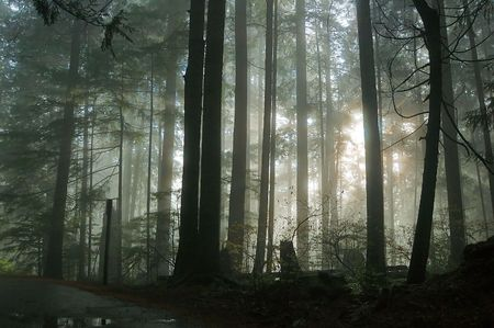 霧の森 写真素材