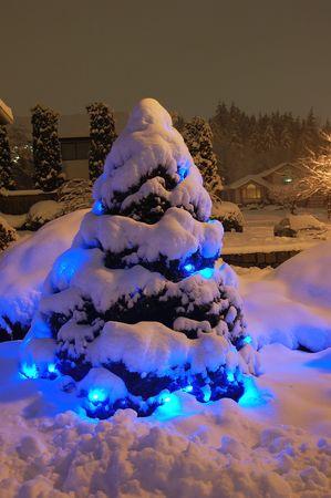snow christmas tree photo