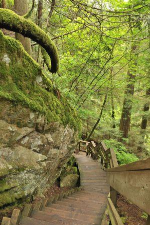 boardwalk trail: lynn valley forest