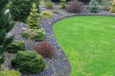 hyacinthus: spring garden