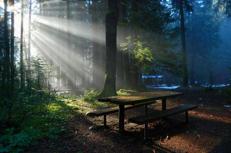 Foggy Forest with sun beam, Lynn Valley Park Imagens