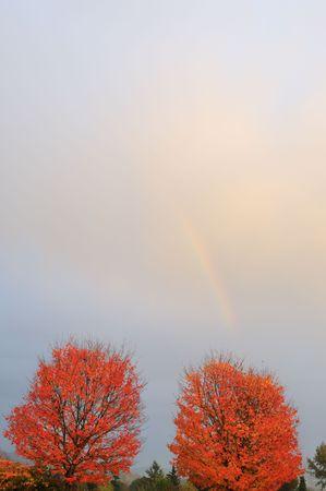 Rot-Ahornbäume und Regenbogen abstrakt  Standard-Bild - 3741160